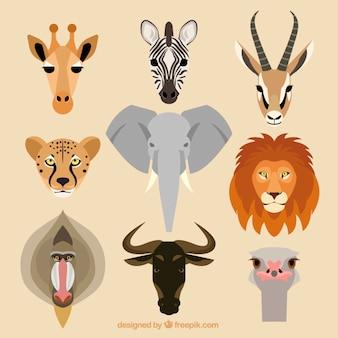Kolekcja afrykańskich zwierząt