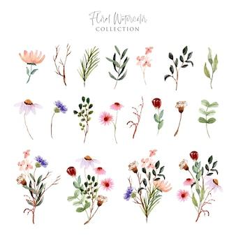Kolekcja akwarela dzikiego kwiatu łąka