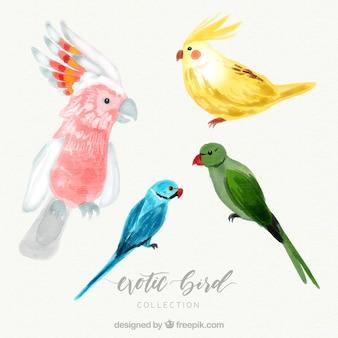 Kolekcja akwarela egzotycznych ptaków