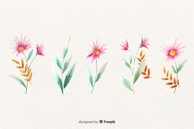Kolekcja akwarela gałąź kwiatowy