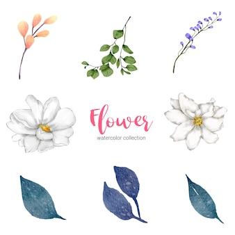 Kolekcja akwarela ilustracja piękny kwiat