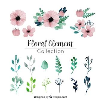 Kolekcja akwarela kwiatowy element