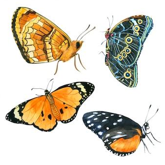 Kolekcja akwarela motyla ręcznie rysowane malowane