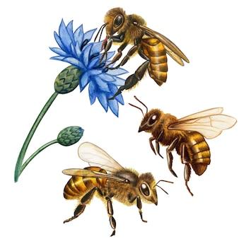 Kolekcja akwarela realistyczne pszczół miodnych