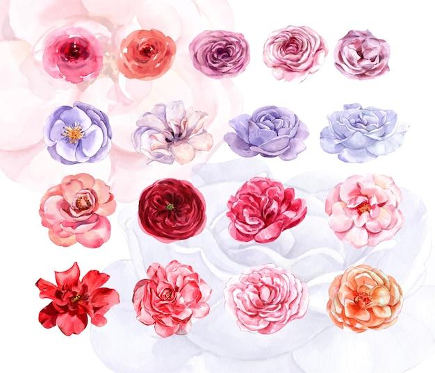 Kolekcja akwarela róż