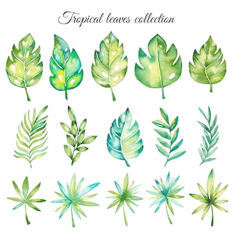 Kolekcja akwarela tropikalny liści