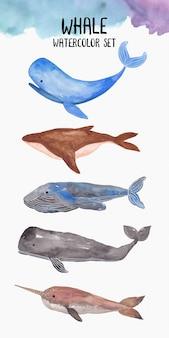 Kolekcja akwarela wieloryba