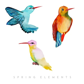 Kolekcja akwarela wiosna ptak