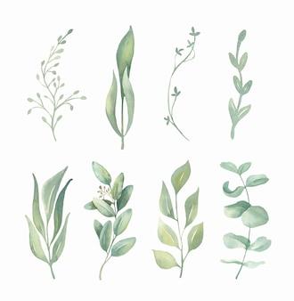 Kolekcja akwarela zielonych liści.