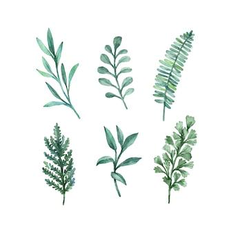 Kolekcja akwarela zielonych liści
