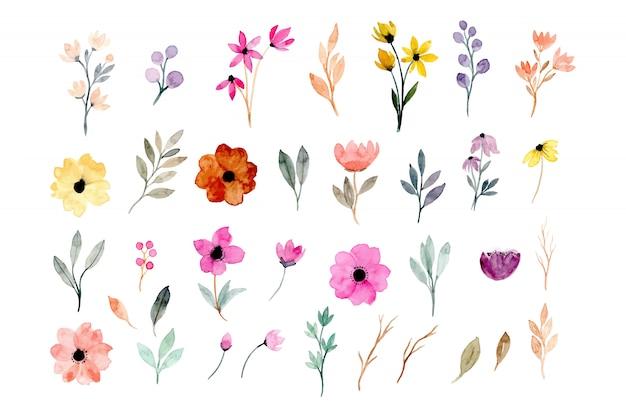 Kolekcja akwarele kwiatowymi elementami