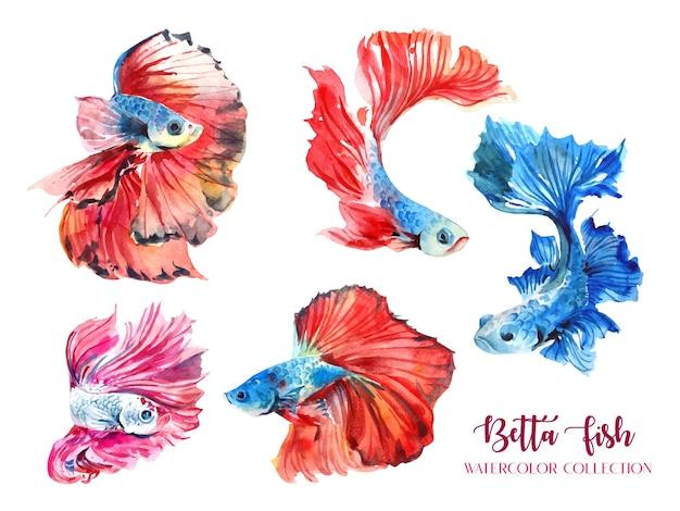 Kolekcja akwareli 5 czerwonych i niebieskich ryb betta.