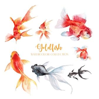 Kolekcja akwareli 7 złotych rybek.