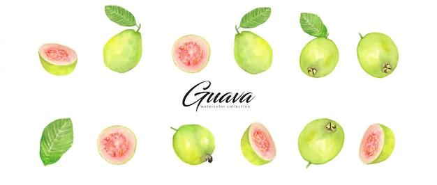 Kolekcja akwareli guawa