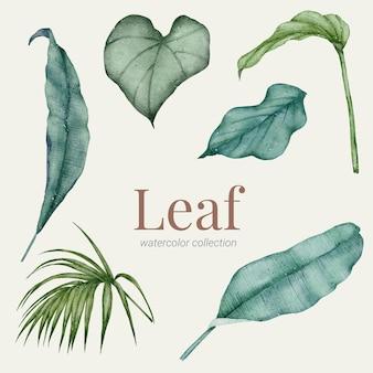 Kolekcja akwareli ręcznie malowanych zielonych liści