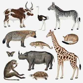 Kolekcja antycznych akwareli wektorowych zwierząt, zremiksowana z dzieł roberta jacoba gordona