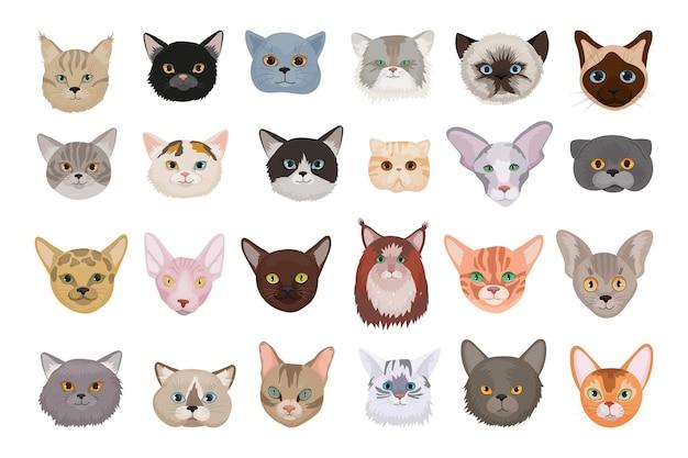 Kolekcja awatarów kotów
