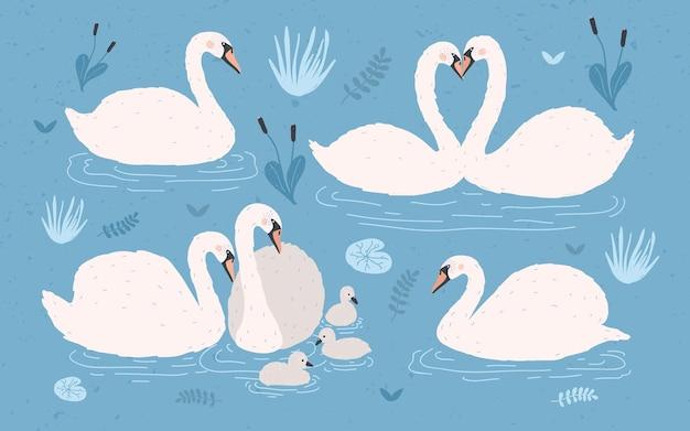 Kolekcja biały łabędź na niebieskim tle. single i pary łabędzi z pisklętami. ręcznie rysowane kolorowy wektor zestaw ilustracji.