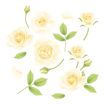 Kolekcja białych róż wektor