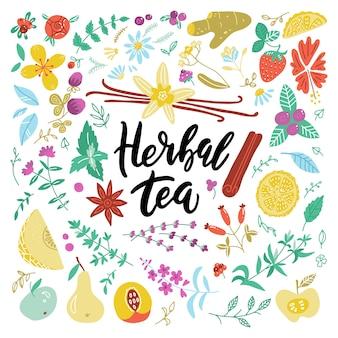 Kolekcja botaniczna ręcznie rysowane składniki herbaty ziołowej.
