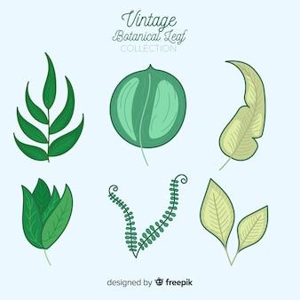 Kolekcja botaniczna w stylu vintage