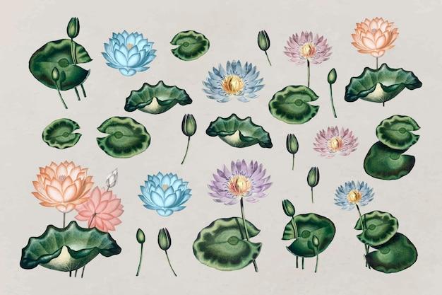 Kolekcja botanicznych lilii wodnych