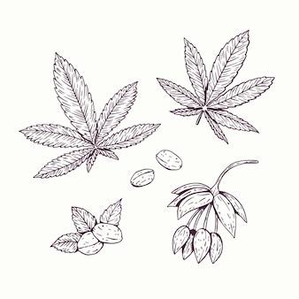 Kolekcja botanicznych liści konopi