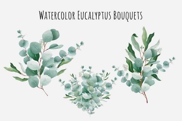 Kolekcja bukietów akwarela eukaliptusay