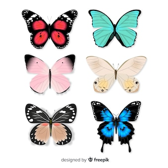 Kolekcja butterfly