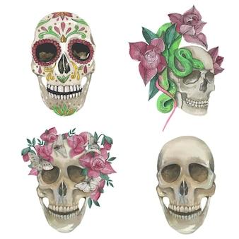 Kolekcja czaszek, ilustracje akwareli. pojedyncze elementy wektorów.