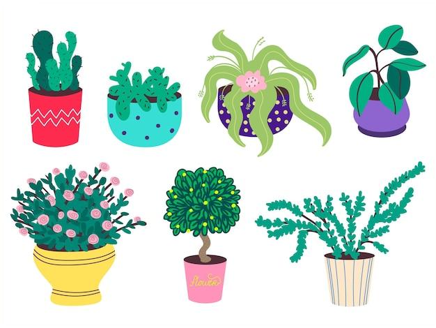 Kolekcja domowych roślin domowych w doniczkach. kaktusy, kauczukowce, róże, bonsai. na białym tle. płaska ilustracja