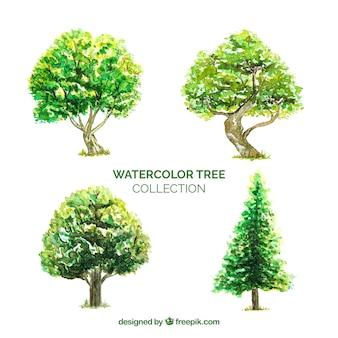 Kolekcja drzew w stylu akwareli