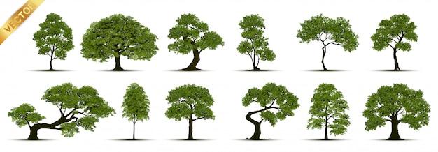 Kolekcja drzewa