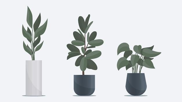 Kolekcja dużej płaskiej rośliny w wazonie stojącej na podłodze elementy dekoracji biurowych i domowych
