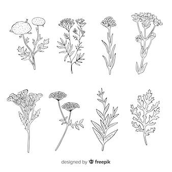 Kolekcja dzikich liści i roślin