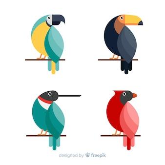 Kolekcja egzotycznych dzikich ptaków tropikalnych