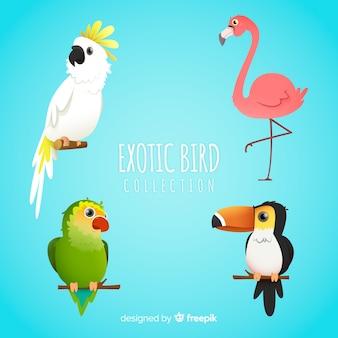 Kolekcja egzotycznych ptaków