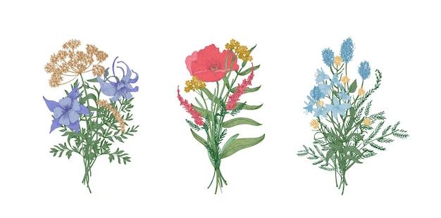 Kolekcja eleganckich bukietów lub bukietów dzikich łąkowych kwitnących kwiatów i ziół kwitnących na białym tle
