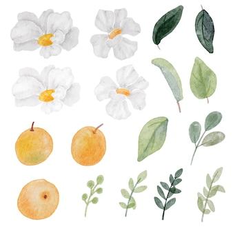 Kolekcja elementów akwarela biały kwiat i pomarańczowy owoc i zielony liść