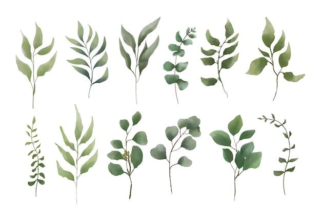 Kolekcja elementów liści akwarela