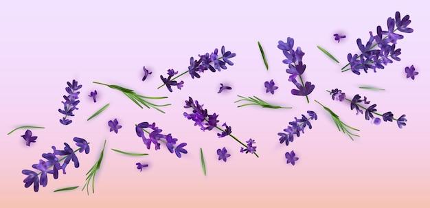 Kolekcja fioletowych kwiatów lawendy. baner z kwiatami lawendy na perfumy, produkty zdrowotne, wesele