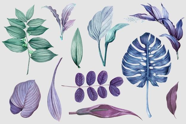 Kolekcja fioletowych liści