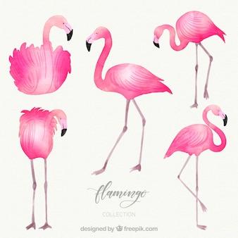 Kolekcja flamingów o różnych pozycjach w stylu akwareli