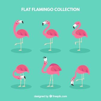 Kolekcja flamingów z różnymi pozami