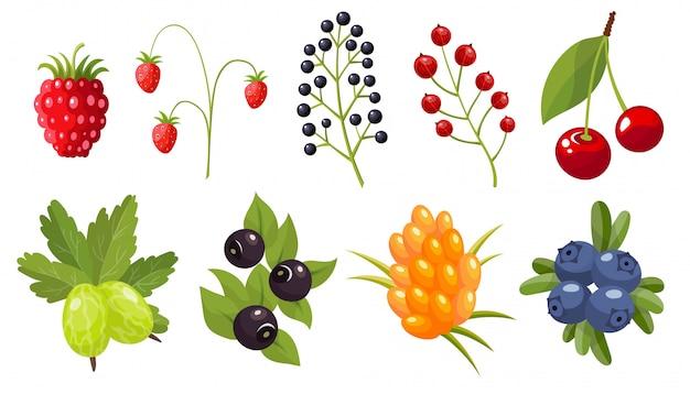 Kolekcja gałązek dzikich jagód. leśna jagoda. słodkie owoce