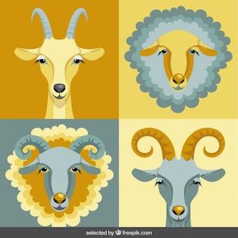 Kolekcja głowy kóz