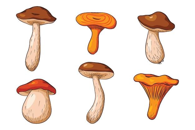 Kolekcja grzybów leśnych. ręcznie rysowane zestaw grzybów jadalnych. pieczarka biała, niskalo, borowiki, kurki. ilustracja wektorowa na logo, menu, druk, naklejki, projektowanie i ozdoby. wektor premium