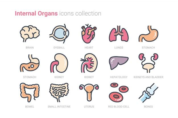 Kolekcja ikon narządów wewnętrznych