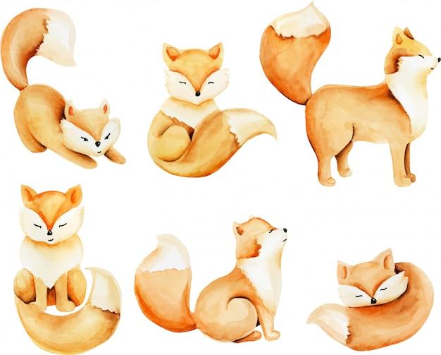 Kolekcja ilustracja akwarela słodkie lisy