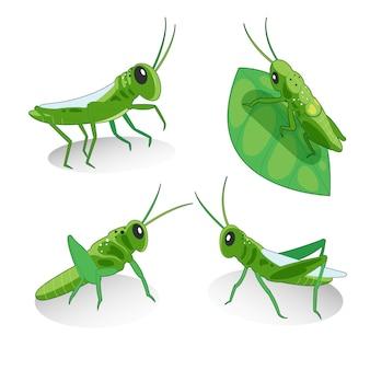 Kolekcja ilustracji grasshoppers